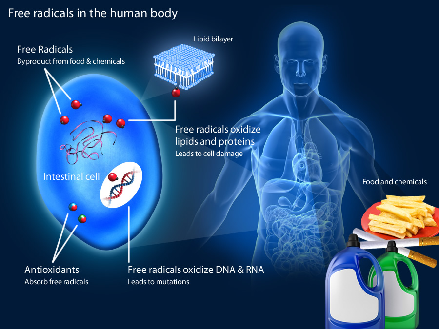 Free Radicals in the body